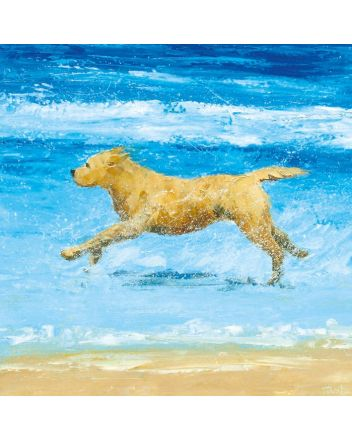 Museum and Galleries Sea Dog Greeting Card