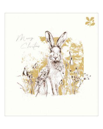 5 Hare National Trust Habitat Charity Christmas Cards