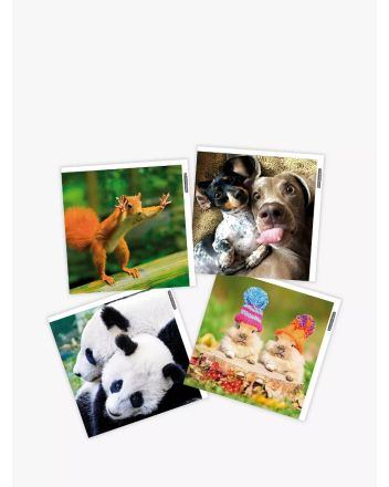 Woodmansterne Pack of 4 Funny Animals Greetings Cards