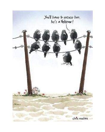 Birdwit Velcrow Birthday Card
